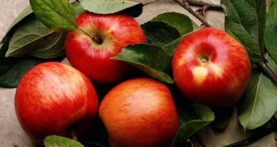 Врачи объяснили, почему полезно есть яблоки каждый день